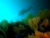 Sensation Diving