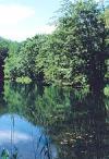 Vandvaerksskoven