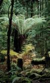 Tasmanian Special Timbers