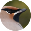Observatoire d'Oiseaux de Tadoussac