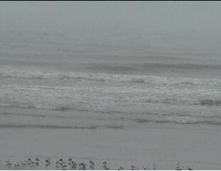 Daytona Beach webcam - Daytona Beach Florida webcam, Florida, Volusia County