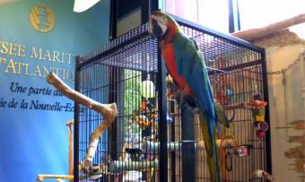 Halifax webcam - Merlin, the Talking Parrot, Halifax webcam, Nova Scotia, Halifax