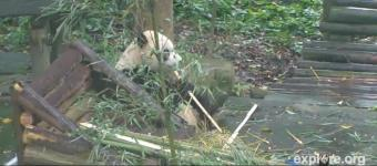 Ya'an webcam - Bifengxia Panda Base webcam, Sichuan, Sichuan