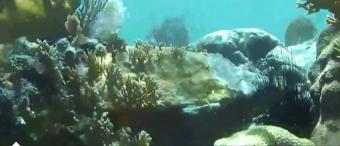 Virgin Gorda webcam - St. Thomas Bay Reef, BVI webcam, British Virgin Islands Regions, British Virgin Islands (BVI)