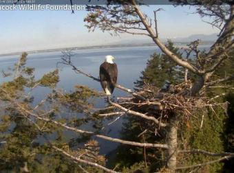 Sidney webcam - Sidney webcam, British Columbia, Vancouver Island