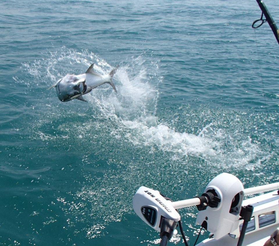 Bahia honda tarpon charters in big pine key monroe county for Pine island fishing charters