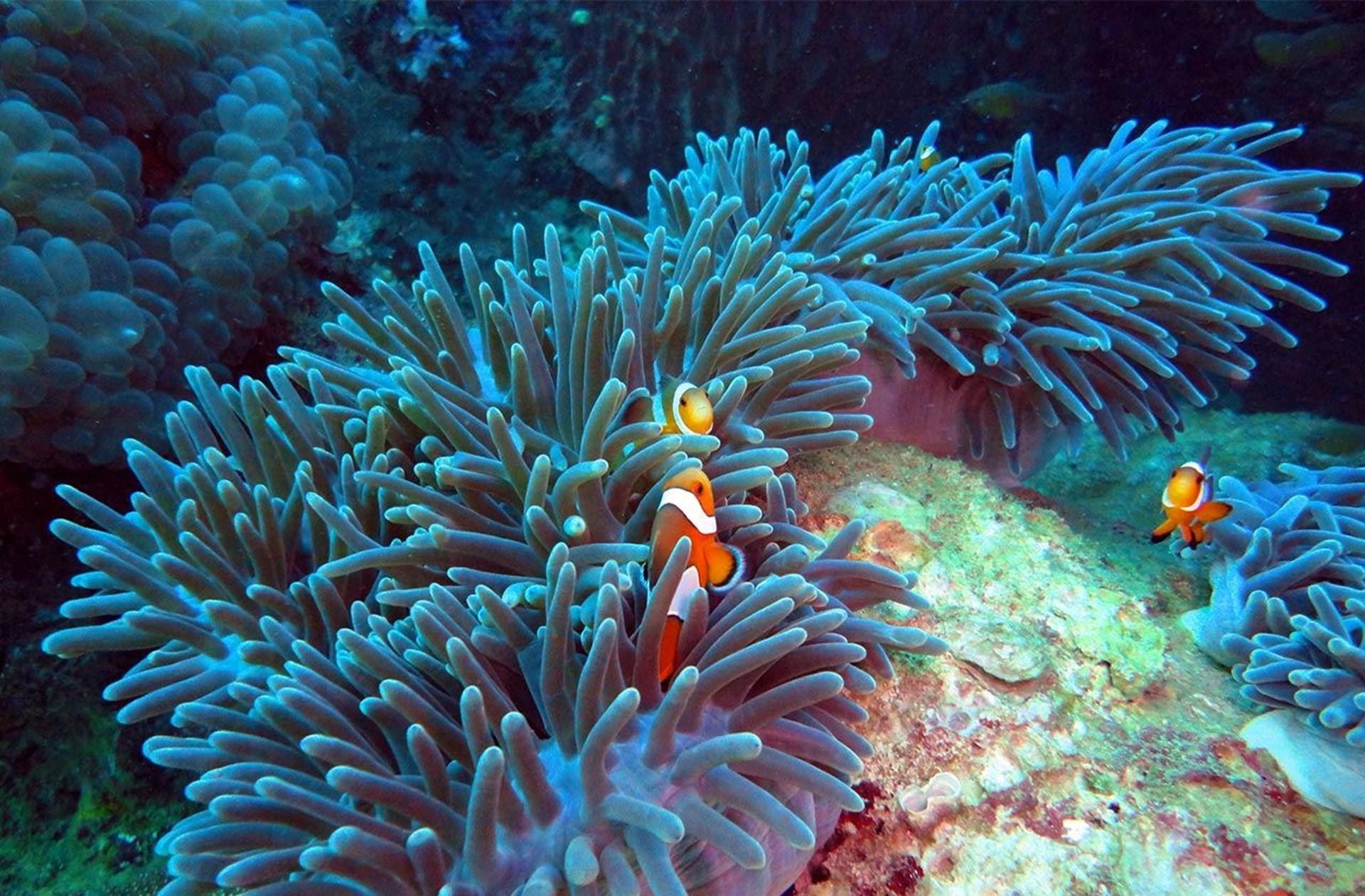 Sea Life Grapevine Aquarium In Grapevine Tarrant County United States Aquarium Guided