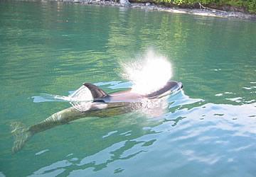 Kayak Companies Vancouver Island