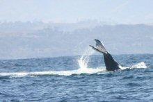 Awesome Tours and Charters in Shelly Beach, KwaZulu-Natal