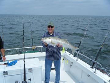 Hooked up ii charters in chesapeake beach calvert county for Chesapeake beach fishing charters