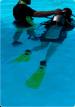 Into The Blue Scuba Diving